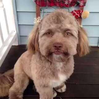 外网上一个长着人脸的狗子火了,真的太像人了我的妈呀~#宠物##搞笑##我要上热门@美拍小助手#