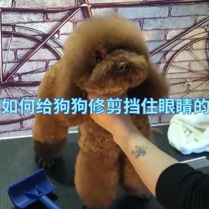 如何给狗狗修剪挡住眼睛的毛#宠物#