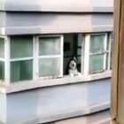 哈哈哈 ,二哈通用暗号!😂😂😂#搞笑##宠物##精选#