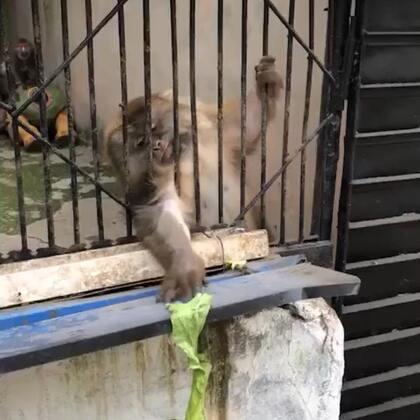 看完不笑你打我#宠物##精选#
