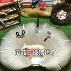 好蘑菇🍄被猪拱了#美食##迷你厨房##我要上热门@美拍小助手#@美拍精选官方账号