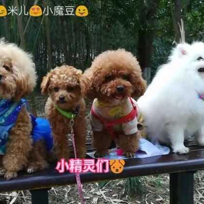 周末😊小伙伴们🐶聚会咯😜😜😜#宠物##精选##小魔豆一家#