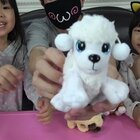 魔術麵包狗-超誇張的可愛♡ #寶寶#