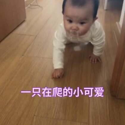 😂😂现在就是喜欢爬,我爬爬爬呀,#宝宝##萌宝宝##宝宝10个月8天#