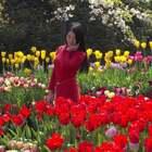 """春天的约会—郁金香篇??美摄帅哥出品??""""百花争妍春光好,赏花踏青正当时"""",春暖花开,重庆又迎来旅游的好时节!由于天气晴好,温度适宜,今年的郁金香开的特别鲜艳。盛开的郁金香浓艳而美丽!红的、黄的、紫的、粉的、白的、混合色的郁金香,令人目不暇接,流连忘返!#精选##旅行#@美拍小助手"""