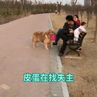 #宠物#不知谁的包丢了,正在找失主