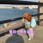 杨杨看钓鱼得看入迷了