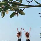 美女双胞胎👍👍好美👍#精美电影##双胞#
