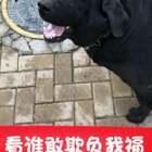 今天遛来福,黑妮跟着,有个小狗突然对来福大叫、黑妮嗖一下冲过去了,吓得对方赶紧跑了,真是没白疼啊😭#宠物##精选##我要上热门@美拍小助手#@宠物频道官方账号