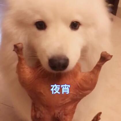 布宝最近食欲特别大,一天吃四顿都满足不了它!😣#精选##宠物##吃秀#