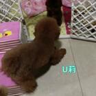 #宠物##汪星人#现在U莉可爱这样跟孩子玩了,想当初怕孩子怕的要死😂😂