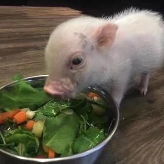#日志#看!你在吃饭!😂😂