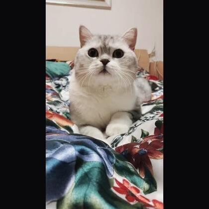【丈母娘家的猫美拍】03-21 22:20