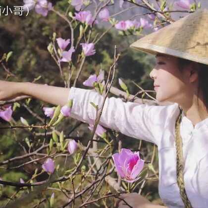 #云南#白花宴,一顿充满花香的饭!春分前后,满山遍野都开满了白花!每到这个季节,村里人都会腾出时间摘些回来,白花有着特殊的清香,用它做的每道菜也都是难得的山珍美味,不过除了喜欢吃花,我们更享受摘花的这个过程!#美食#