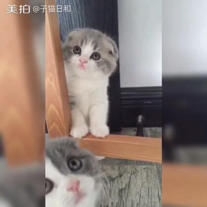 【子猫日和美拍】03-31 20:30
