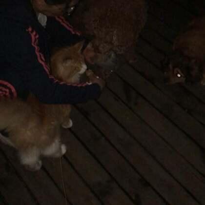 #宠物##家有萌宠#吃完晚饭出来找狗砸们玩一会儿