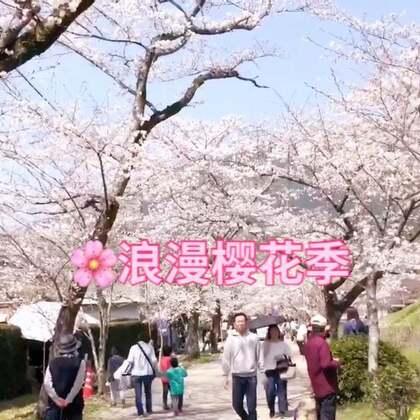 美拍总算恢复了!九州的樱花已经满开啦,和上海的小伙伴们相约一起赏樱花,也让二位体验了一下日本主妇的忙碌生活!😄#i like 美拍##我要上热门##lisaerli日本生活#