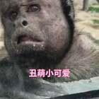 丑萌丑萌的 你们会希望它作为你的宠物吗?#动物##热门#