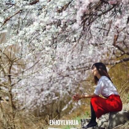 #精选##春暖花开##北京##旅行#阳春三月,桃花烂漫!大北京也增添了丝丝浪漫,满街满巷的花朵,让人驻足