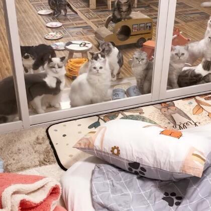 #宠物##家有萌宠#不要以为猫多我就怕你们,参观是要买票的!!😌😌