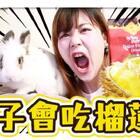 【实验】兔子会吃榴莲吗?!看到榴莲的反应居然是?【Utatv】@美拍小助手 #宠物##我要上热门#