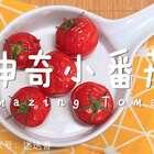 越吃越水嫩,神奇小番茄帮你完成逆生长!#美食##精选##我要上热门#