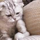 #宠物#猪哥轻手轻脚教训鼠弟的样子好有爱❤️