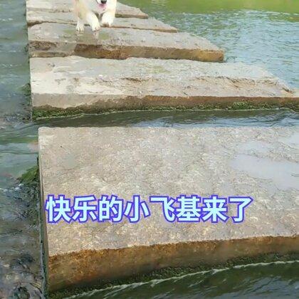 蹦哒的小短腿~#宠物##肉圆小短腿##柯基犬#@美拍小助手 @美拍精选官方账号