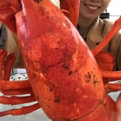 今天运气真好,这只龙虾好肥!#吃秀#