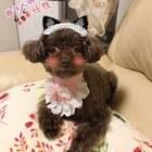 萌萌哒小可爱㊗️大家小长假快乐🎈🎉🎊#我的宠物小精灵##照片视频##宠物#