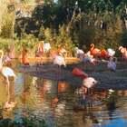 巴塞罗那动物园#小伟伟伟伟的旅行日记##旅游##精选#