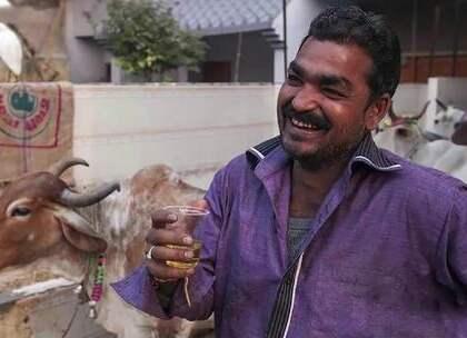 """【印度人用牛尿做饮料,称其会供不应求,还想销往全世界!】在印度,牛拥有着非常高的地位,印度人在家中饲养牛,这里的牛还被赋予了""""旅游""""的权利,还可以走在高速路上,他们还用牛尿做成饮料,想销往世界。#旅行##印度##风俗#"""