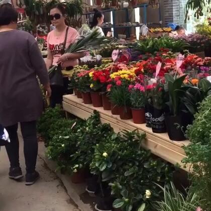 #逛花市~##可爱多肉植物#陪姐姐去花市买可爱的肉肉🌵🌵☘️☘️