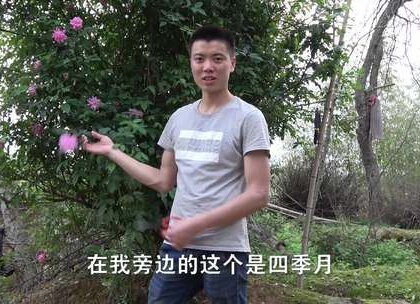 农村一棵月季花可以扦插几万棵出来,爱花人士来了吗,欢子原来也喜欢种花花草草,春天来了教你如何扦插月季花。欢子TV拍摄