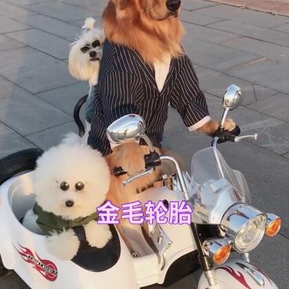 #宠物##搞笑#轮胎霸气出场