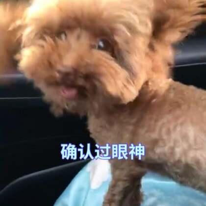 我们家几米真的热成狗了#疯狂刷屏大赛##宠物##精选#