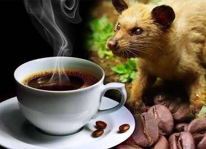 【全球最贵咖啡,年产量不超过400公斤,为什么有钱人抢着买?】印尼是全世界最大的群岛国家,全世界最昂贵的粪便也在这里,那就是猫屎咖啡,它是由麝香猫在吃完咖啡果之后,把咖啡豆原封不动的排出,由于产量稀少,滋味特别,因此也是世界上最贵的咖啡之一。#旅行##印尼##咖啡#