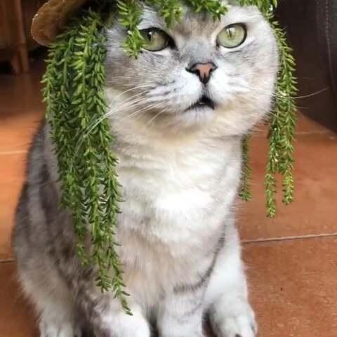 【猫侠美拍】#宠物#论美颜、滤镜的重要性……...