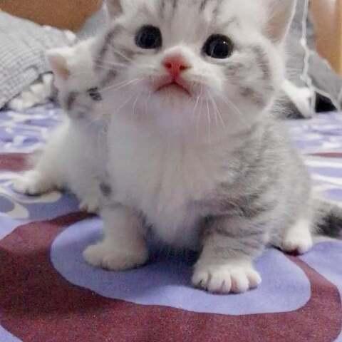 【S喵S美拍】#宠物##萌宠#妈妈去哪里了?是不...