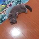 JioJio一丢丢~#宠物#【我家店鋪:https://shop61141321.taobao.com】