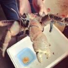 #美食吃货#@RENE燕子[金三胖] 椰子蟹现在比较少了,养再家里好霸气😁😁
