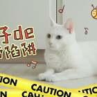 timi: 小小胶带,怎么可能难倒我?! ✨关注并评论点赞,下周抽两位送出猫咪手账本哦✨#宠物##我们养猫吧##mimo#