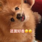 欢迎大家观看吃素达人仔仔 表演如何花式吃面😂😂😂😂#精选##宠物##宠物界吃货#