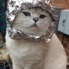 喵星人颜值担当准备好上太空了!😻😸@小冰 #喵星人逆袭##宠物##谁是真颜王#