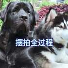 #宠物#黑豆:有个很烦的妈是什么体验