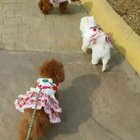 #宠物#粗去玩就是嗨皮❤#运动##穿秀#