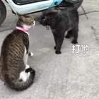 到底打不打嘛~~😂😂#宠物##精选#
