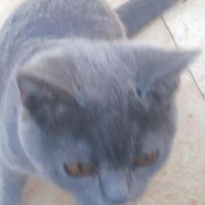 #我的猫片#十秒钟蹭蹭小坏蛋占了7秒