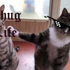 看来革命友谊不是那么的坚固😂😂@吸猫所
