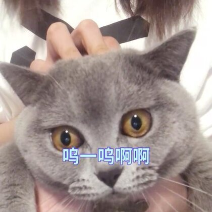 #宠物##精选##我要上热门# 猫主人疯了@马达旋风-金淑娴 🤣🤣🤣@美拍小助手